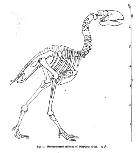 Diatryma Skeleton_Reconstruction_Diller et al