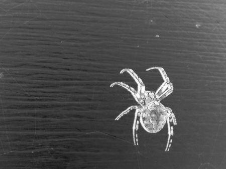 Negative spider