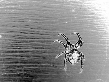 Solarised Spider