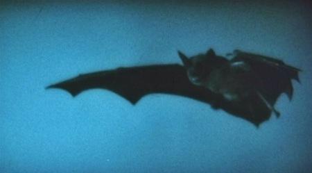 Nosferatu Bat.jpg