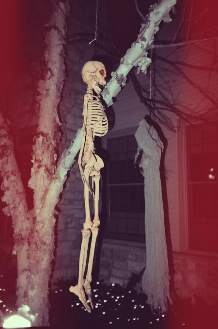 The Lost Skeleton